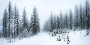 An early snow up along the North Fork of the Flathead River, north of Columbia Falls, Montana.