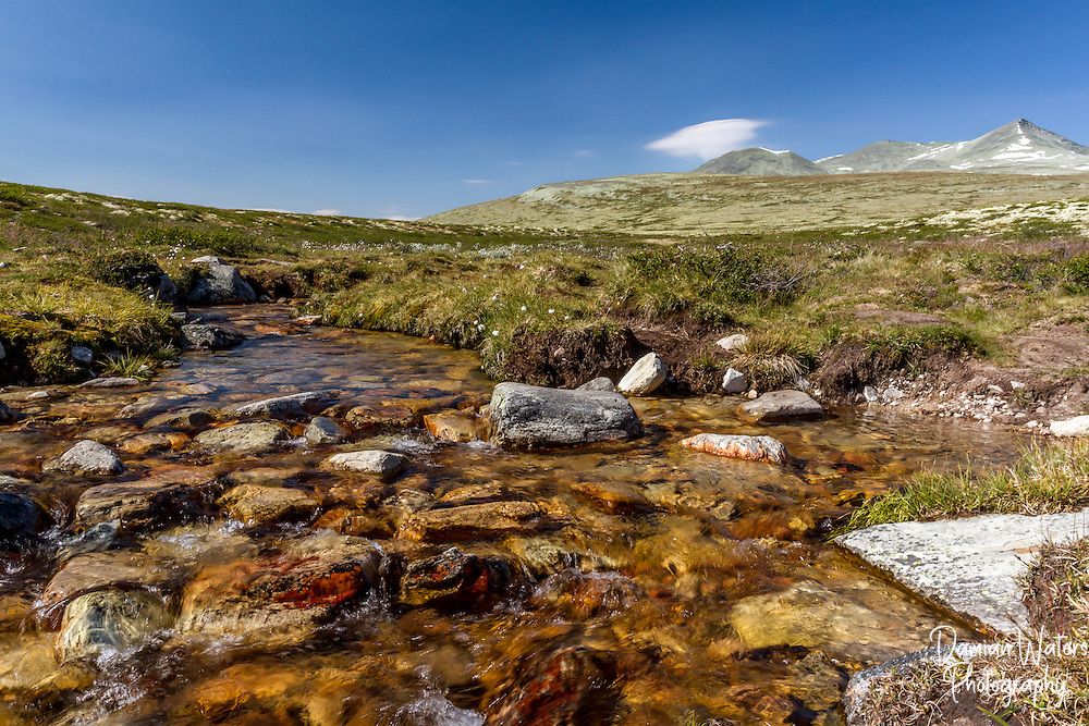 Stream and Reindeer moss at Rondane National Park, Norway - August