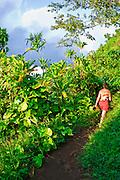 Hiker on the lush Kalalau Trail, Na Pali Coast, Island of Kauai, Hawaii USA