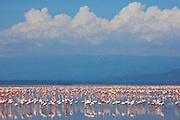 Multitudes of flamingos at Lake Nakuro, Kenya, Africa