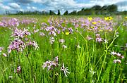 Nederland, Heteren, 26-5-2018Bloemenpracht in een veld .Foto: Flip Franssen