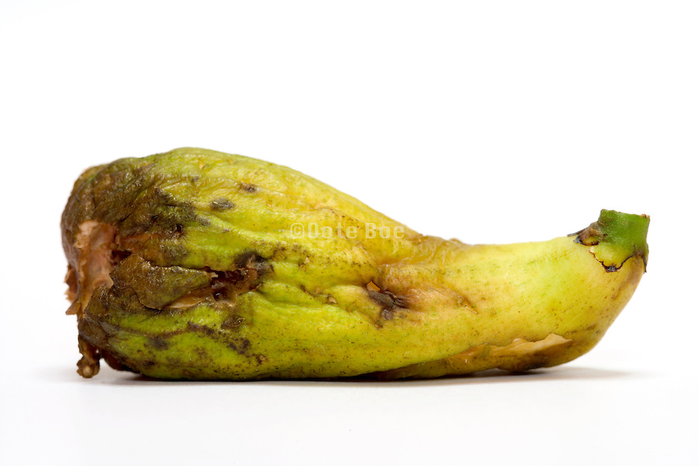 rotting fig against a white background