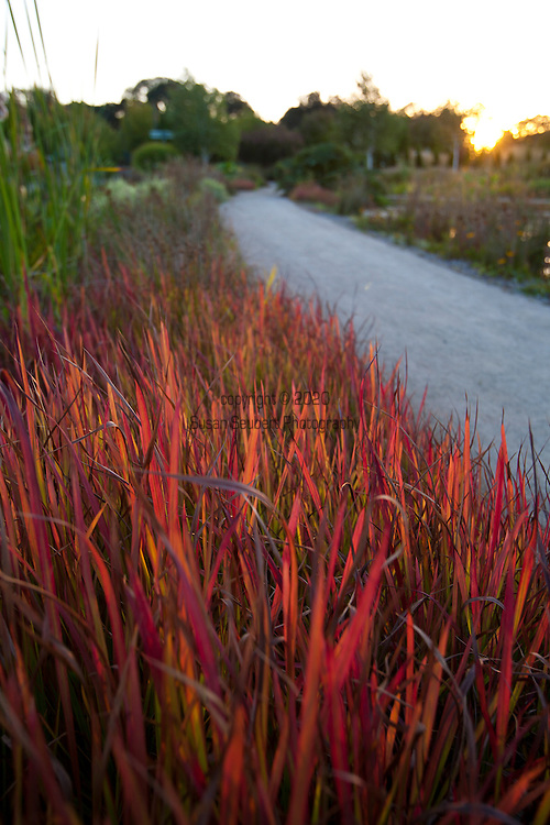 The Oregon Garden in Silverton, Oregon. Fire-red grass lines a pathway.