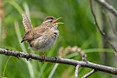 Birding Article