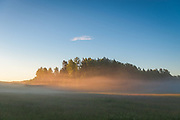 Sunlight colors golden fog over meadow and small forest patch, near Ērģeme, Latvia Ⓒ Davis Ulands | davisulands.com