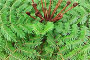 Tree fern, Wellington Botanical Garden, North Island, New Zealand