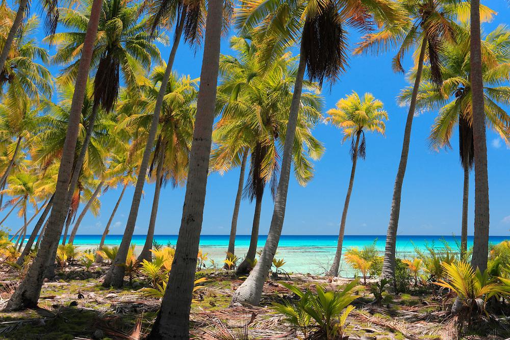 Playas solitarias en Rangiroa, Archipiélago Tuamotu, Polinesia Francesa
