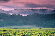 Morning spring storm clouds over hills and vineyard, McDowell Valley, near Hopland, Mendocino County, California