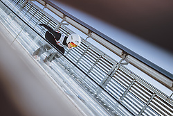 25.02.2021, Oberstdorf, GER, FIS Weltmeisterschaften Ski Nordisch, Oberstdorf 2021, Damen, Skisprung, HS106, im Bild Nozomi Maruyama (JPN) // Nozomi Maruyama of Japan during women ski Jumping HS106 Competition of FIS Nordic Ski World Championships 2021. Oberstdorf, Germany on 2021/02/25. EXPA Pictures © 2021, PhotoCredit: EXPA/ JFK
