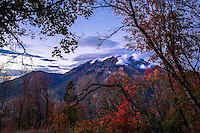 Mt. Timpanogos rises above the valley floor surrounded by the remaining Fall colors of Utah at sunset.