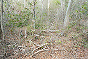 Understorey of Dry Forest, Zombitse-Vohibasia National Park, Madagascar, tropical deciduous forest,