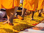 """02 JANUARY 2015 - KHLONG LUANG, PATHUM THANI, THAILAND: Monks walk on a marigold covered footpath at Wat Phra Dhammakaya on the first day of the 4th annual Dhammachai Dhutanaga (a dhutanga is a """"wandering"""" and translated as pilgrimage). More than 1,100 monks are participating in a 450 kilometer (280 miles) long pilgrimage, which is going through six provinces in central Thailand. The purpose of the pilgrimage is to pay homage to the Buddha, preserve Buddhist culture, welcome the new year, and """"develop virtuous Buddhist youth leaders."""" Wat Phra Dhammakaya is the largest Buddhist temple in Thailand and the center of the Dhammakaya movement, a Buddhist sect founded in the 1970s.   PHOTO BY JACK KURTZ"""