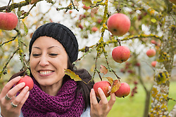 Woman holding apples in her hands from tree in an apple orchard, Bavaria, Germany