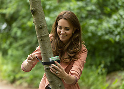 The Duchess of Cambridge fixes an AudioMoth acoustic recording device to a cherry tree during her visit to the Natural History Museum, central London. Picture date: Tuesday June 22, 2021.