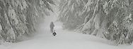 A pack carrying dog leads snowshoers as they emerge from the obscurity of a snowstorm along the Rainier Vista Trail of the Mount Tahoma Trails cross country and snowshoe hut-to-hut trail system in the Cascade Mountain Range near Mount Rainier in Washington state, USA. panorama