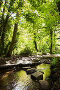 Green leaves and trees reflecting in the stream in St Catherine's Woods. Walking tracks and stepping stones leading further into the forest. Jersey, CI