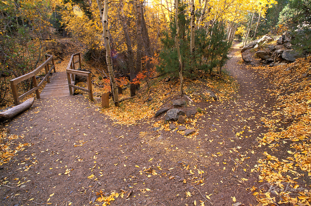 Fall color at the junction of the Mosca Pass Trail and the Montville Nature Trail, Great Sand Dunes National Park, Colorado.