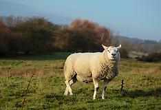 A Walk Around Rye, East Sussex, England