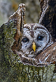 Wildlife : Birds and Animals - Photographs for Sale