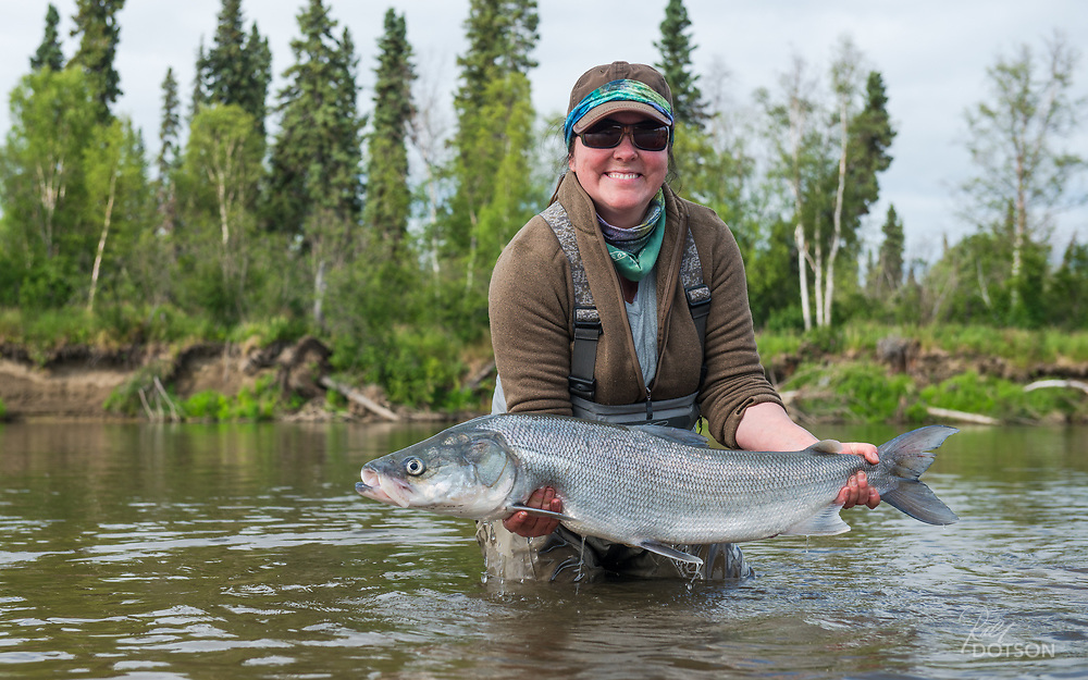 All smiles to land one of these big shefish on a fly in the remote Yukon delta region of Alaska.