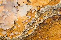 thermophilic bacteria and algae, Yellowstone National Park