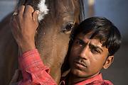 Marwari horse and groom at Rohet Garh, Rajasthan, India.