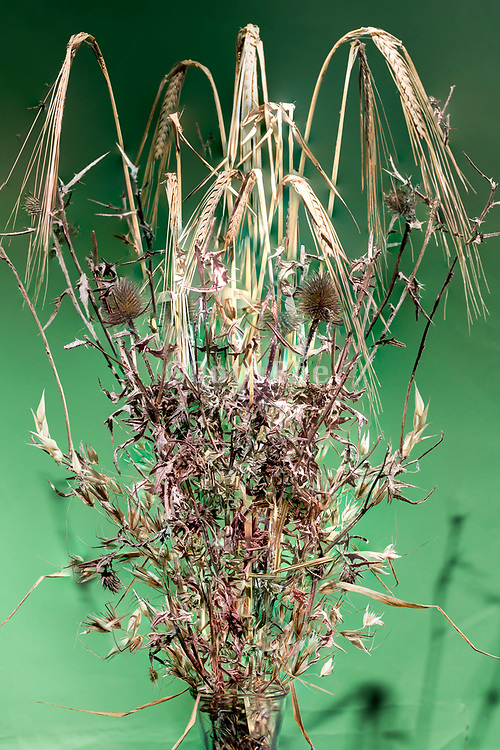 wheat with various wild plants studio still life composite