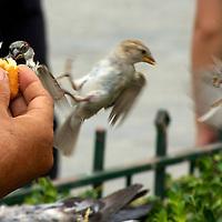Feeding the birds in front of Notre Dame de Paris.