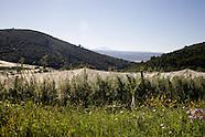 provence landscapes F043