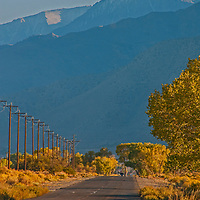 A car drives past telephone poles, blooming rabbitbrush and fall-colored Cottonwood trees under the dramatic eastern Sierra Nevada crest on Five Bridges Road near Bishop in California's Owens Valley.