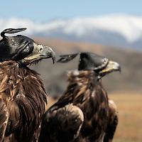 Mongolia - Eagle Hunters & Shaman