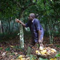 CAYAWE coop is a Fairtrade-certified cocoa producer based in Aniassue in the Ivory Coast. The coop has nearly 1,500 members and can produce around 5,000 tons of cocoa a year. With the Fairtrade premium from 2015, amongst other things, CAYAWE built a high school for up to 210 students and drilled six wells.