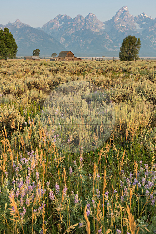 The John Moulton barn in the Mormon Row Historic District along Antelope Flats with the Grand Teton mountains behind at Grand Teton National Park, Wyoming.