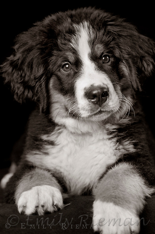 Puppy photographed on black and white film.