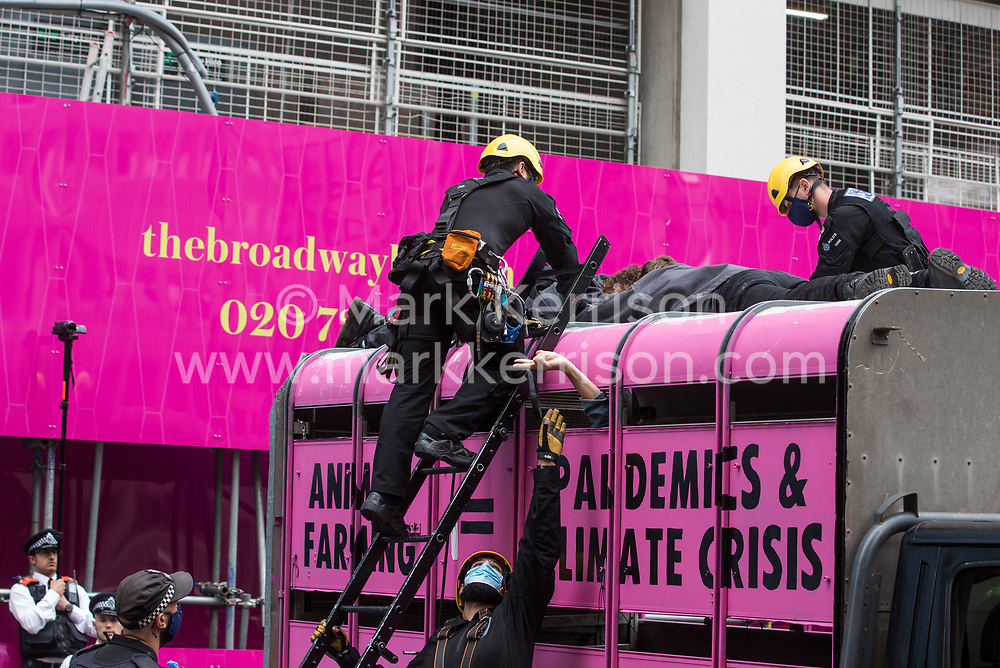 London, UK. 3rd September, 2020. Metropolitan Police and British Transport Police officers attend to animal rights activists from Animal Rebellion who had glued themselves to the top of and inside a truck in order to blockade the Department of Health and Social Care. Animal Rebellion activists are protesting in solidarity with victims of the global food system and to demand that the UK transitions to a sustainable plant-based food system.