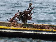 Indígena guna recolectando algas / comarca de Guna Yala, Panamá.<br /> <br /> Edición de 10 | Víctor Santamaría.