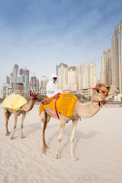 Camels on Jumeirah Beach in Dubai with high rise apartments at Dubai Marina to rear United Arab Emirates UAE