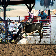 Grady Jasperson on Red Eye Rodeo bull Trash Man at the Darby Broncs N Bulls event Sept 7th 2019.  Photo by Josh Homer/Burning Ember Photography.  Photo credit must be given on all uses.