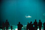 Nederland, Arnhem, 25-5-2005De Ocean, onderdeel van Burgers zoo. Groot diepzeeaquarium met haaien. Bezoekers in dierentuin. Recreatie.Foto: Flip Franssen/Hollandse Hoogte