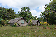 South Pacific, The Republic of Vanuatu, Shefa Provence, Epule River Valley Rainforest
