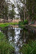 Morro Coast Audubon Society Sweet Springs Nature Preserve, Baywood Park, San Luis Obispo County, California, USA