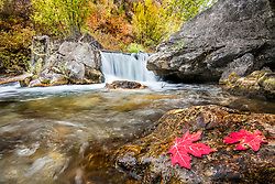 Idaho mountain stream hustling autumn away making room for winter one leaf at a time.