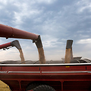 Three combines unload wheat into a grain cart, racing against the oncoming storm. Kimball, Nebraska, July 11, 2017.