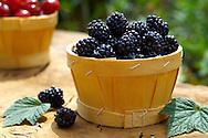 Fresh picked autumn blackberries