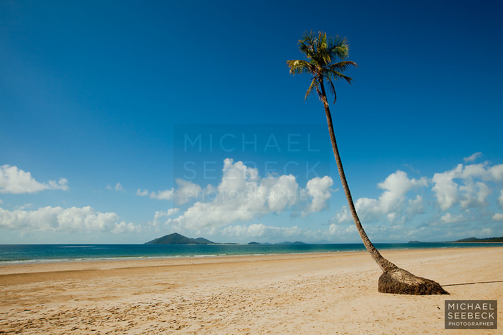 A solitary coconut palm growing on Mission Beach. I suspect this palm tree is no more, having been blown over by Cyclone Yasi.<br /> <br /> Open Edition Print / Stock Image
