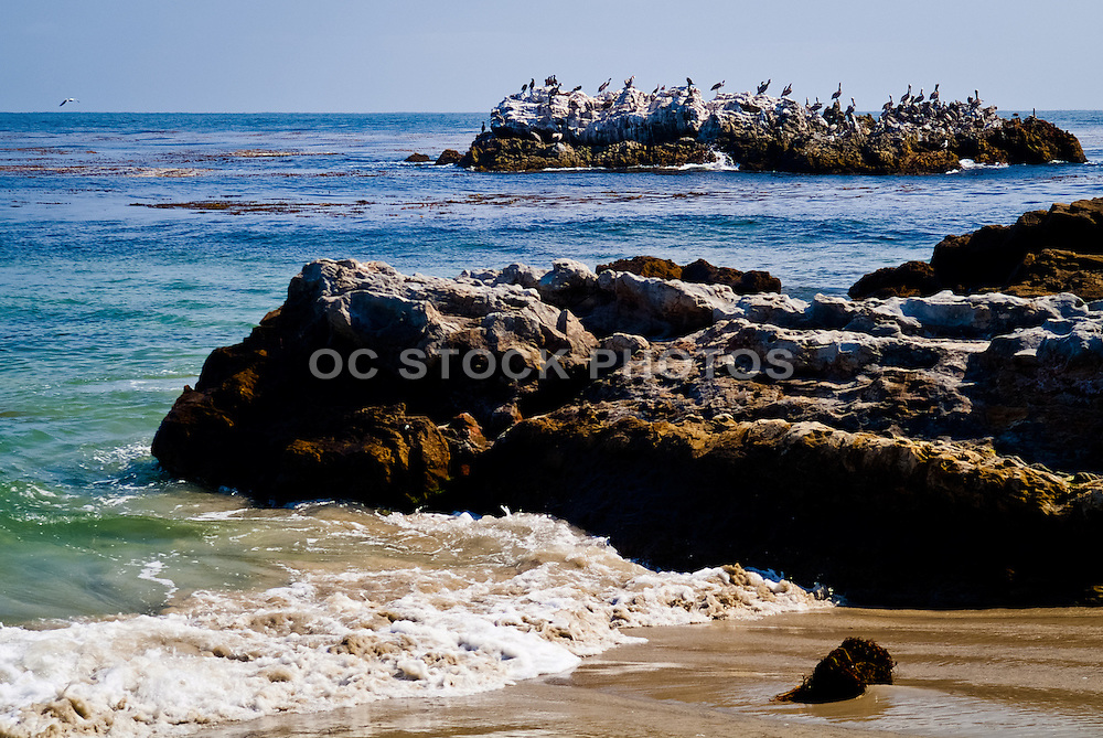 Pelicans Sitting On Rocks In The Ocean In Laguna Beach California