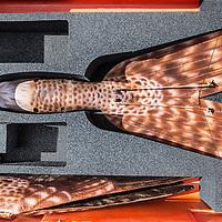 Duitsland, Weeze, 27 april 2016.<br /> Computer gestuurde nepvalk vliegveld Weeze.<br /> inzetten van computer gestuurde nepvalk bij vliegveld Weeze om vogels te verjagen van start en landingsbaan.<br /> <br /> Computerized fake falcon at Weeze airport in Germany.<br /> Use of computerized fake falcons at Weeze airport to scare birds from runway.<br /> <br /> Foto: Jean-Pierre Jans