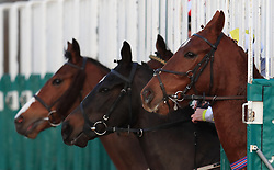 Horses emerge from the stalls at the start of the 32Red.com Handicap at Southwell Racecourse.