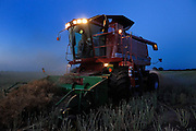 Custom harvester Justin Spielman from Newkirk, Oklahoma combines a field of canola near El Reno as night falls.