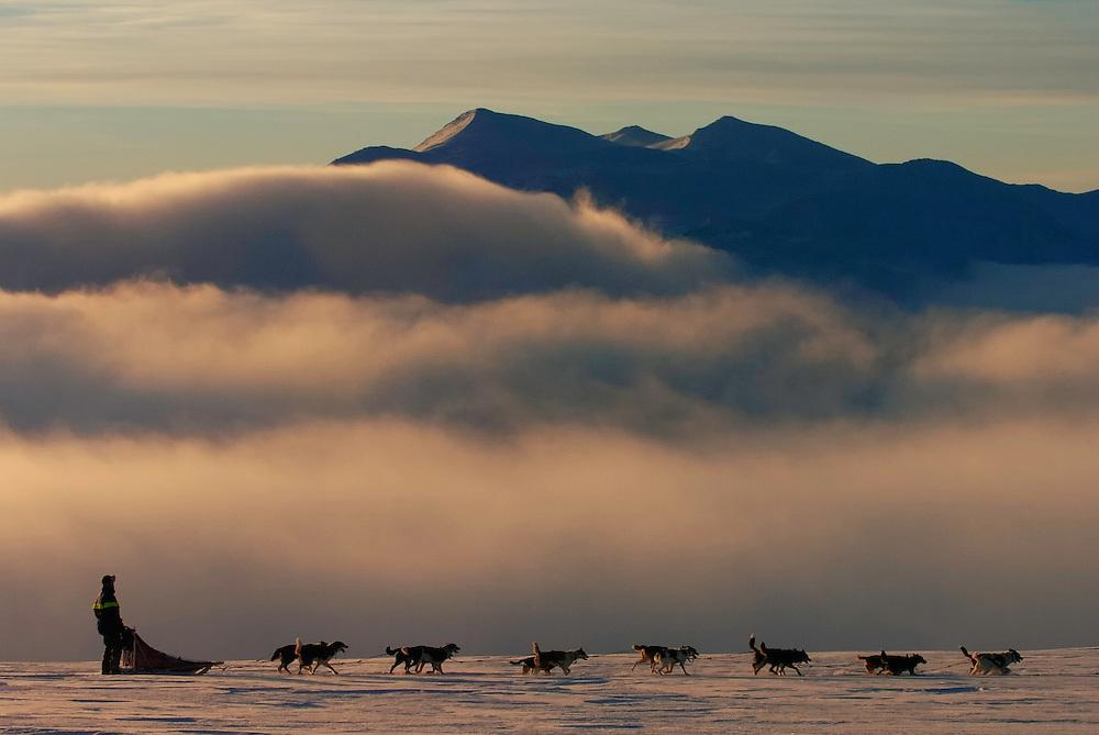 Dog sledding, Vindelfjallen National Park, Vasterbotten, Lapland, Sweden. Ecotourism